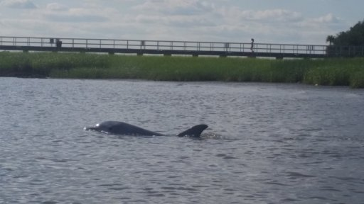 HCPT dolphin*